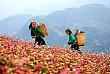 Hà Giang - Địa Chỉ Của Du Lịch Trải Nghiệm