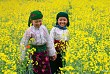 Hà Giang: Xuân Về Trong Ánh Mắt Trẻ Thơ