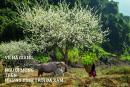 Về Hà Giang, kể chuyện người mông trên những đỉnh trời đá xám