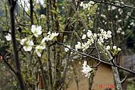 Ảnh Đẹp Sủng Là Mùa Hoa Nở
