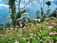 Chiêm Ngưỡng Hoa Tam Giác Mạch- Linh Hồn Nơi Cao Nguyên Đá Hà Giang