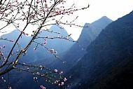 Chùm Ảnh Mùa Xuân Trên Cao Nguyên Đá