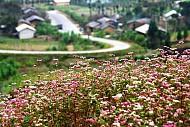 Đá Nở Hoa Nơi Thung Lũng Sủng Là- Hà Giang