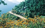 Đến Với Con Đường Đá Nở Hoa Tuyệt Vời Ở Hà Giang