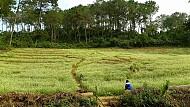 Hà Giang - Hùng Vĩ Và Nên Thơ Nơi Địa Đầu Tổ Quốc