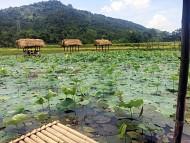 Khám phá vẻ đẹp Hồ Sen Hà Giang