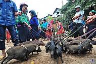 Lợn Cắp Nách - Thưởng Thức Đặc Sản Vùng Cao Hà Giang