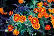 Những Hình Ảnh Đẹp Về Sắc Hoa Trên Cao Nguyên Đá