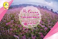 THÔNG TIN LỄ HỘI HOA TAM GIÁC MẠCH LẦN III NĂM 2017