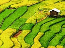 Ruộng Bậc Thang Tuyệt Đẹp Ở Hà Giang