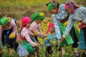 Tour Du Xuân Hà Giang 2015 Khám Phá Vòng Cung Đông Bắc