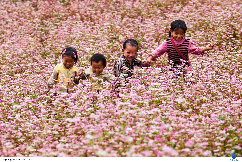 Hà Giang: Lặng lẽ cùng vẻ đẹp hoa tam giác mạch