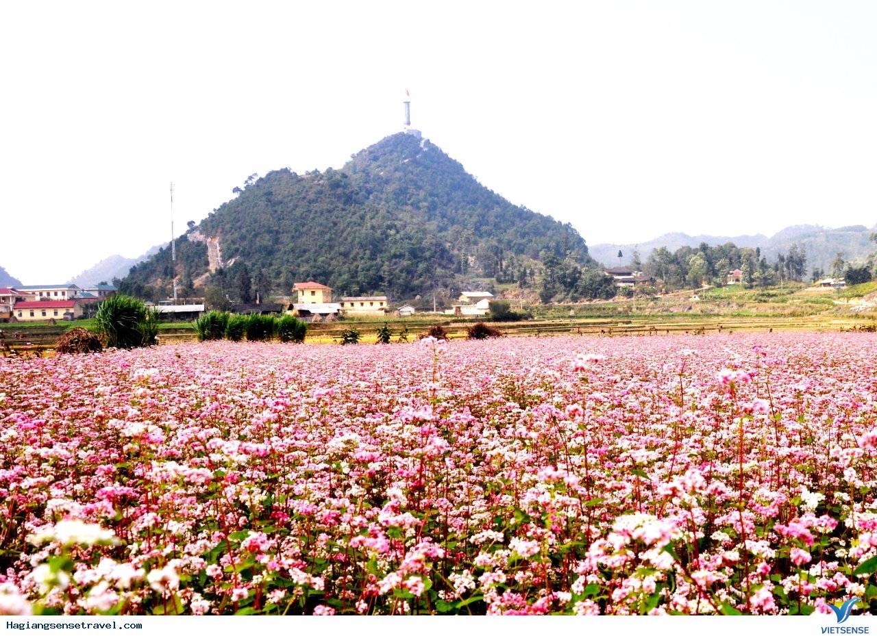 Nơi Nào Ngắm Hoa Tam Giác Mạch Đẹp Nhất Hà Giang